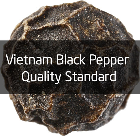 Vietnam black pepper quality standard - Chu Se Pepper