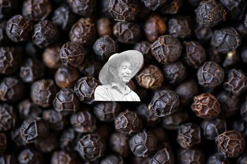 Black-pepper-prices-stand-still-21-5