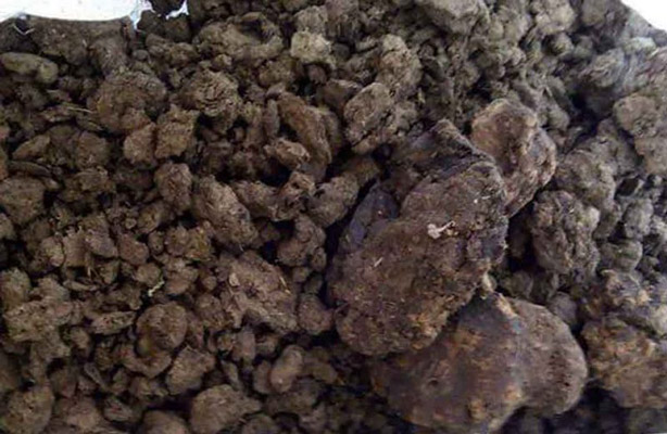 dried cow pat - organic fertilizer