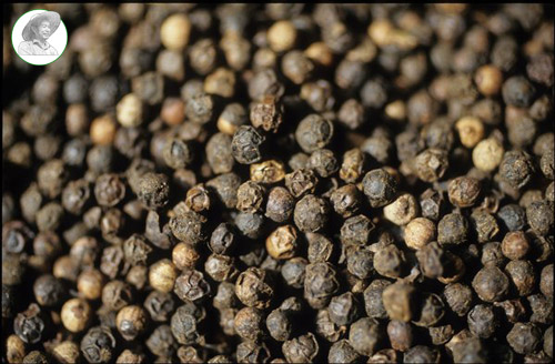 Where To Buy Fresh Peppercorns Direct From The Farm Chu Se Pepper
