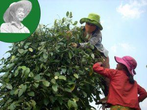 vietnam black pepper price 20-07-2018