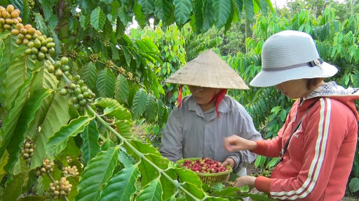 Credits proving the value of Vietnamese agricultural products - Photo 1.